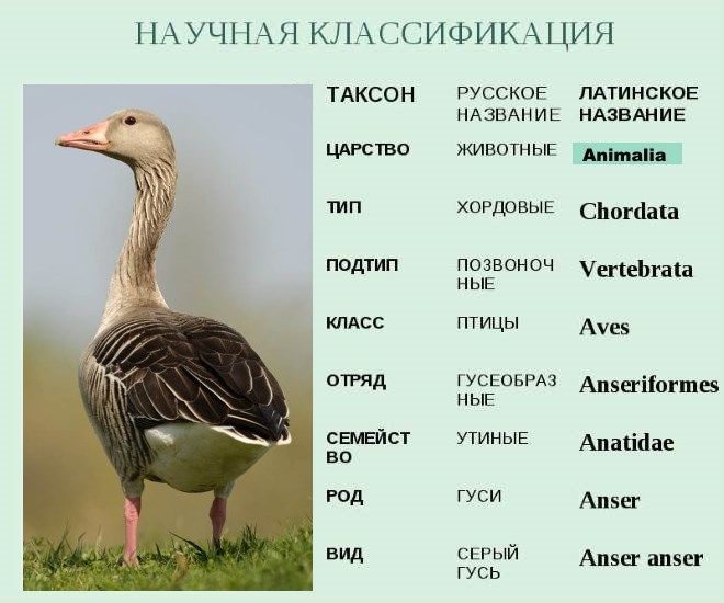 animals-aves-classification2