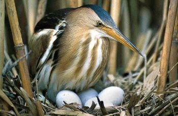 bird-hatching1